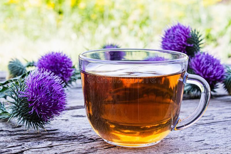 Tea with a thistle and flowers of a thistle medicinal plant on a wooden background. Pink thistle thistle flower. Herbal tea royalty free stock photo