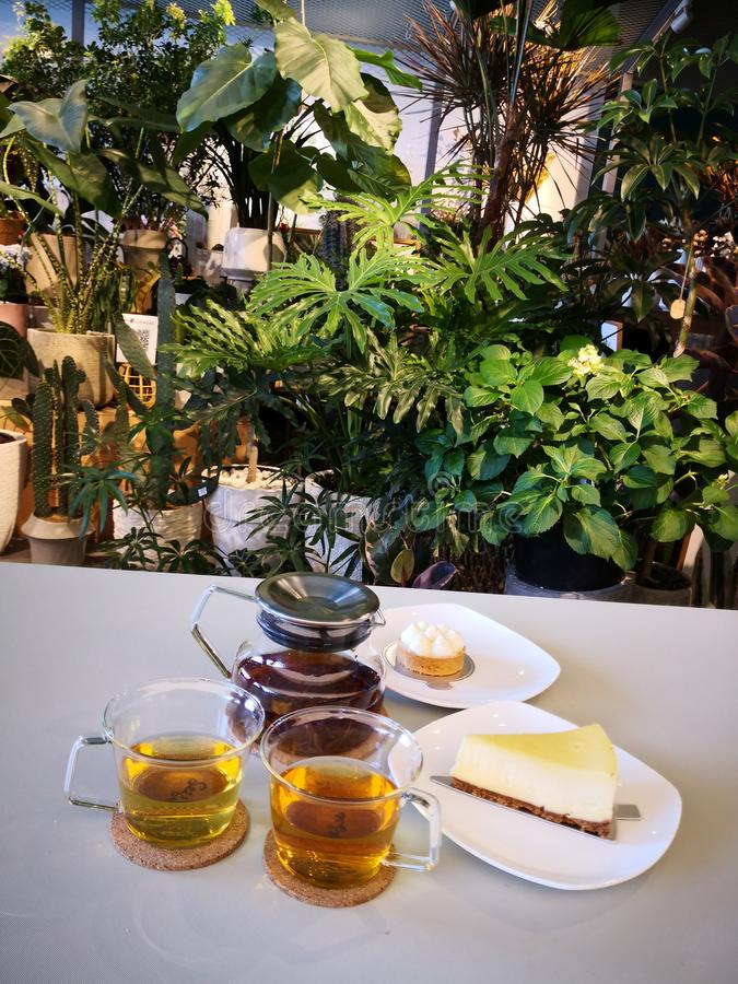Tea time in the afternoon. Delicious dessert, plants and flowers in the cafe, a good environment for gathering stock photography