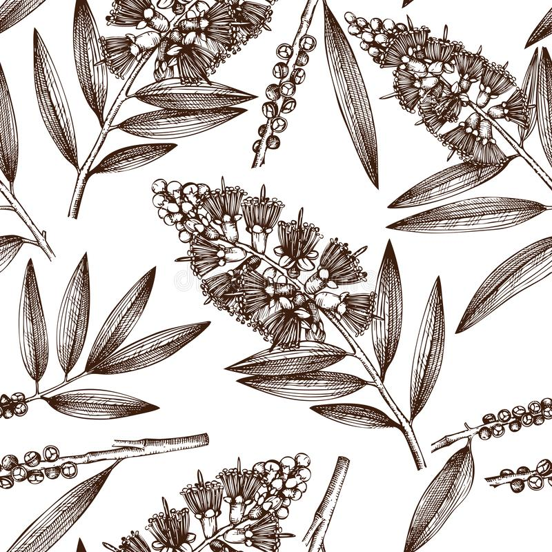 Vintage background with Hand drawn tea tree sketches. Cosmetics and medical myrtle plant seamless pattern. Vector cajeput tree bot. Anical drawings with berries royalty free illustration