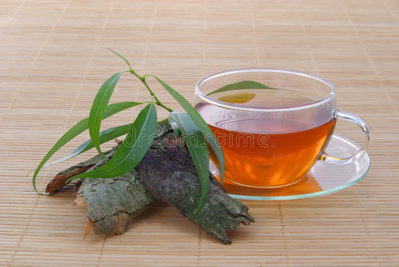 Tea willow. Herbal tea from willow tree royalty free stock photography