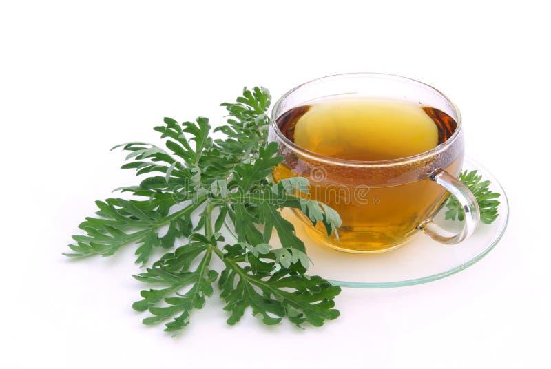 Tea wormwood stock photos