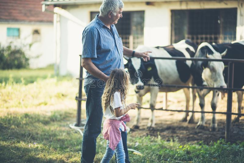 Teach child to love animals. Grandfather and granddaughter on the farm. Copy space royalty free stock photo