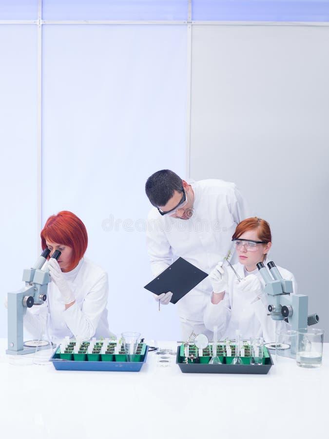 Teacher supervising lab experiments stock image
