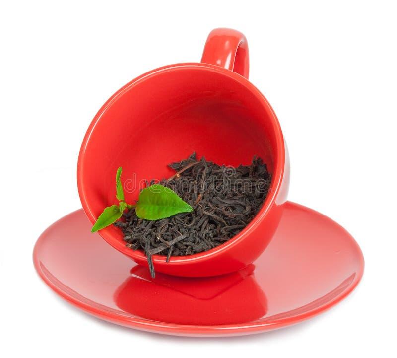 Teacup med svart tea royaltyfria foton
