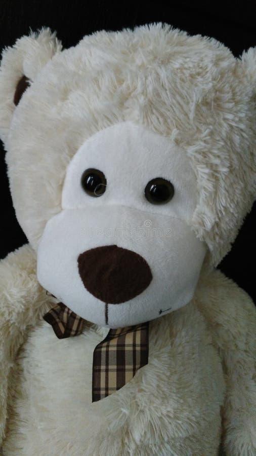 Teady björn royaltyfri bild