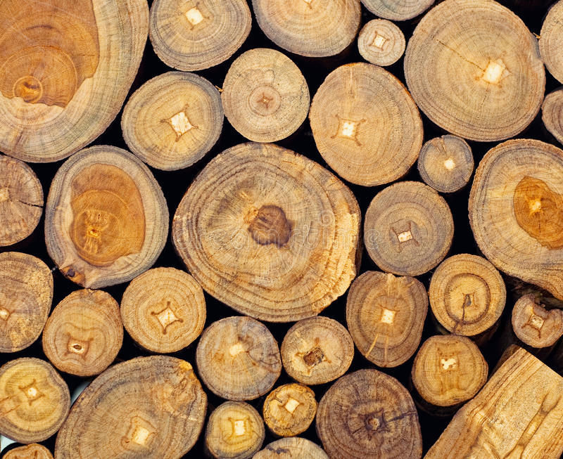 Teak. Background of dry teak logs stacked up on top of each other in a pile royalty free stock photography
