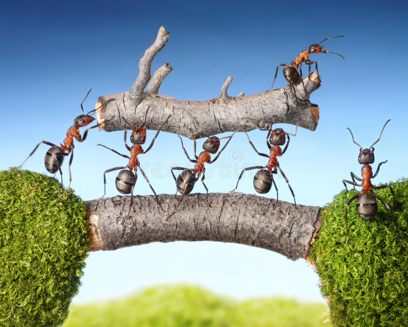 Team of ants carry log on bridge, teamwork royalty free stock photography