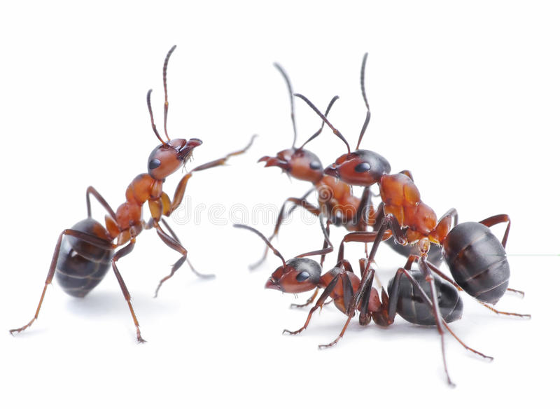 Team of ants, meeting concept royalty free stock images