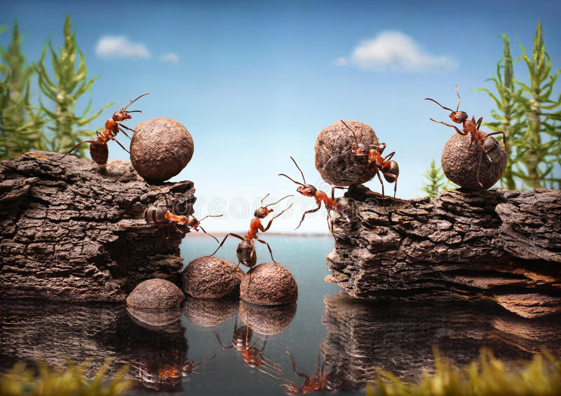 Team of ants work constructing dam, teamwork royalty free stock photography