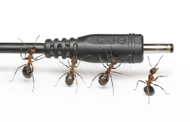 Download Team Of Ants Works With Plug Connection, Teamwork Stock Image - Image: 19011137