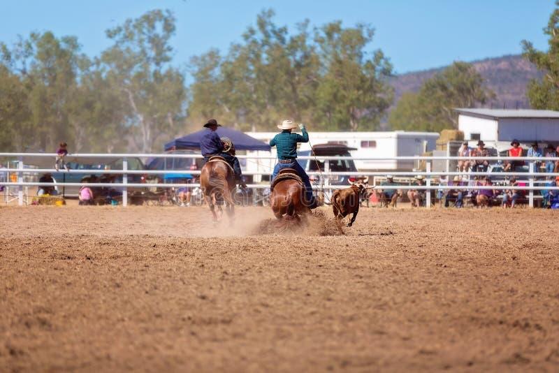 Team Calf Roping At ein Land-Rodeo stockbild