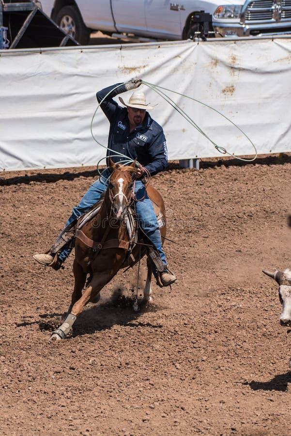 Team Cattle Roper que aponta para os chifres foto de stock royalty free