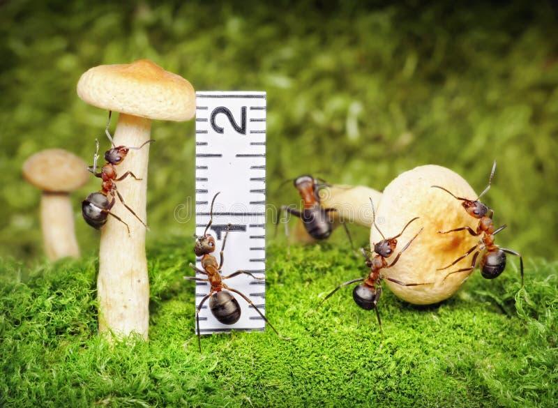 Team dat van mieren, groepswerk oogst royalty-vrije stock afbeelding