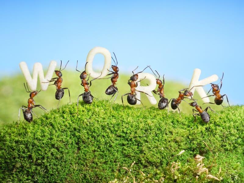 Team dat van mieren het woordwerk, groepswerk construeert royalty-vrije stock foto's