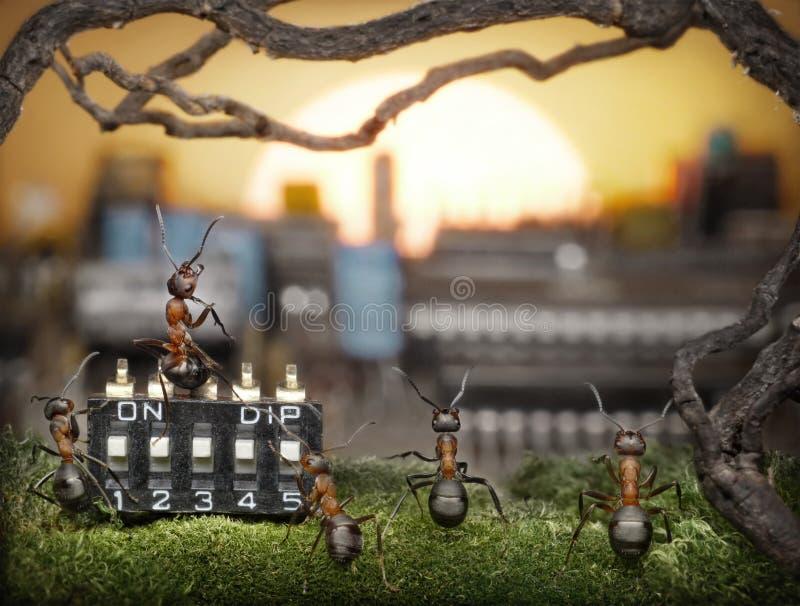 Team dat van mieren zonsopgang, fantasie beheert stock fotografie
