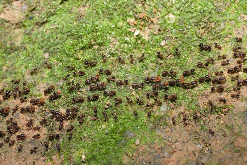 Team der Ameisen mit Nahrung lizenzfreie stockfotos