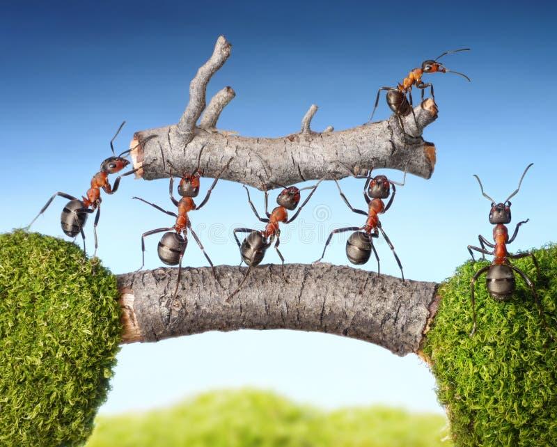 Team der Ameisen tragen LOGON-Brücke, Teamwork lizenzfreie stockfotografie