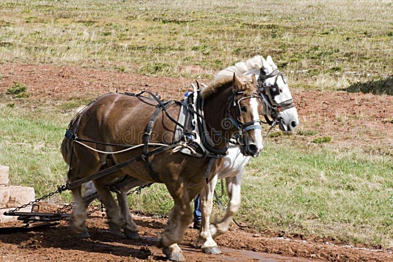 Team der Pferde stockbild