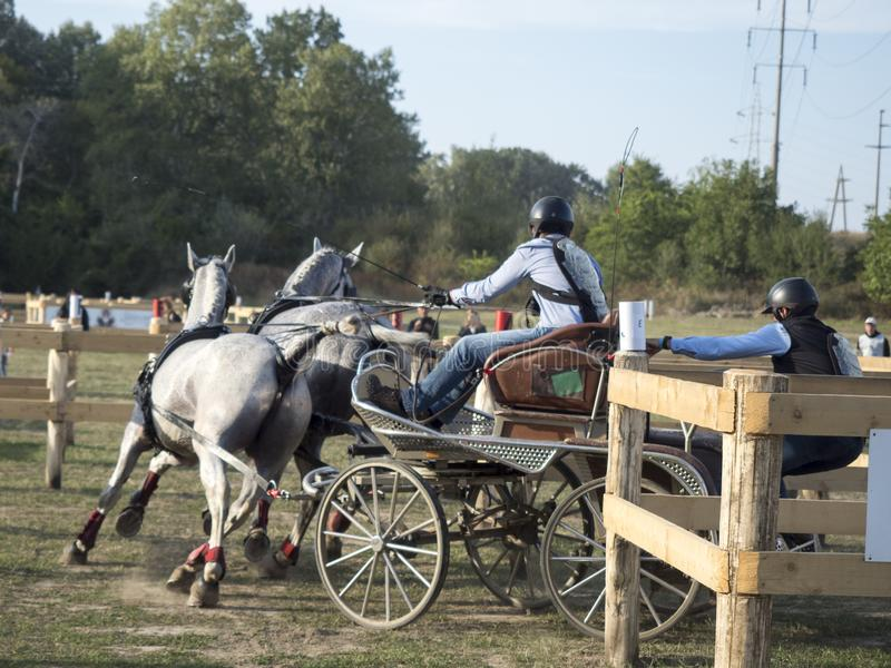 Team des 2 Pferdmarathonereignisses stockbild