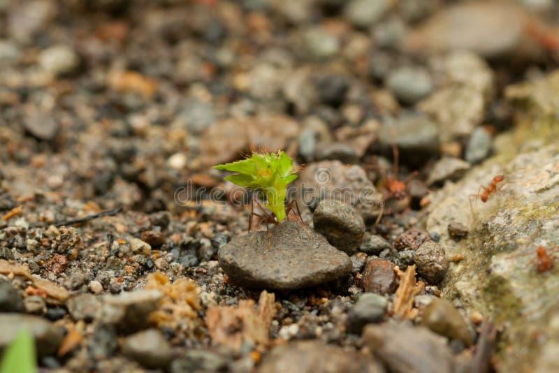 team die van mieren, groepswerk construeren royalty-vrije stock foto
