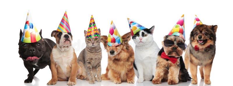Team die van zeven gelukkige huisdieren kleurrijke verjaardagshoeden dragen royalty-vrije stock afbeeldingen