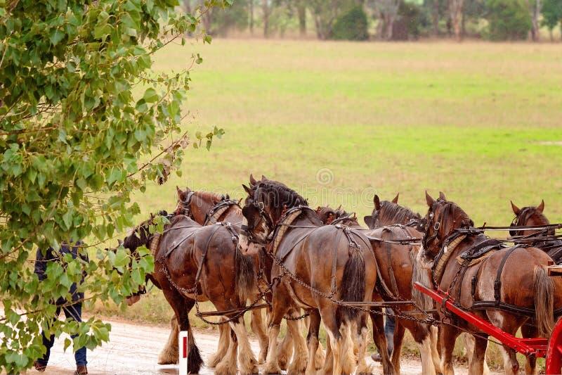 Team Of Draft Horses In de Regen royalty-vrije stock afbeeldingen