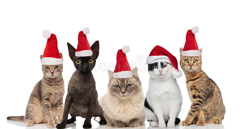 Team of five cute cats wearing santa hats sitting and standing stock photography