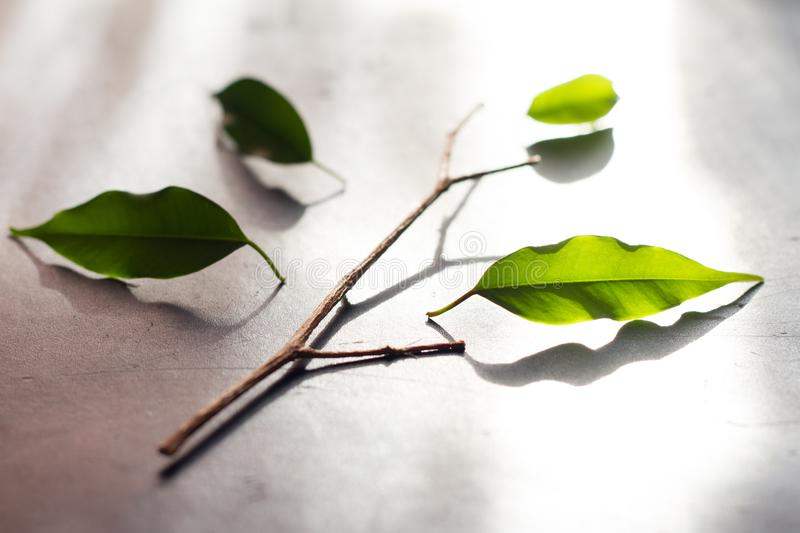 Team metaphor business concept with tree and leaves stock photo