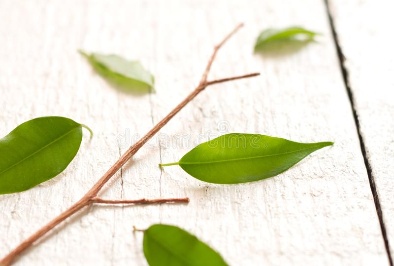Team metaphor business concept with tree and leaves stock photos