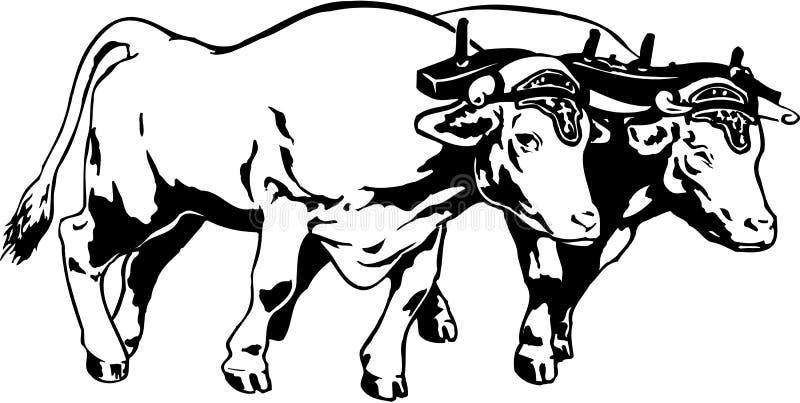 Team of Oxen Illustration stock illustration