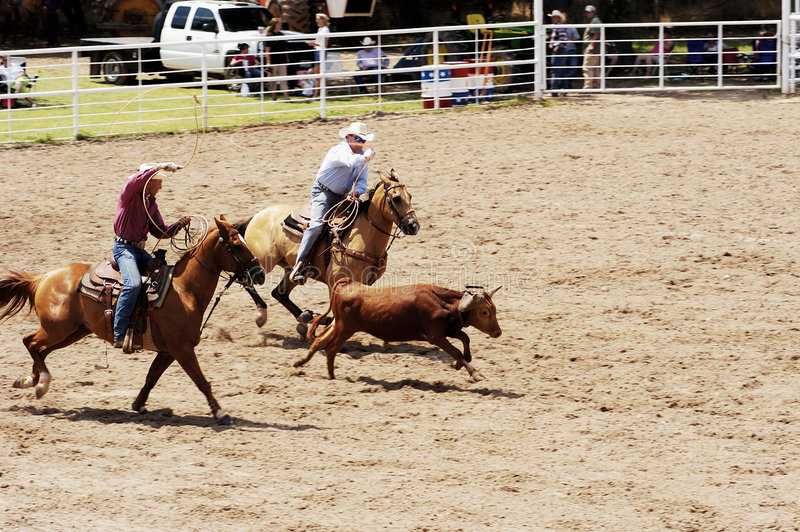 Team Roping stockbilder