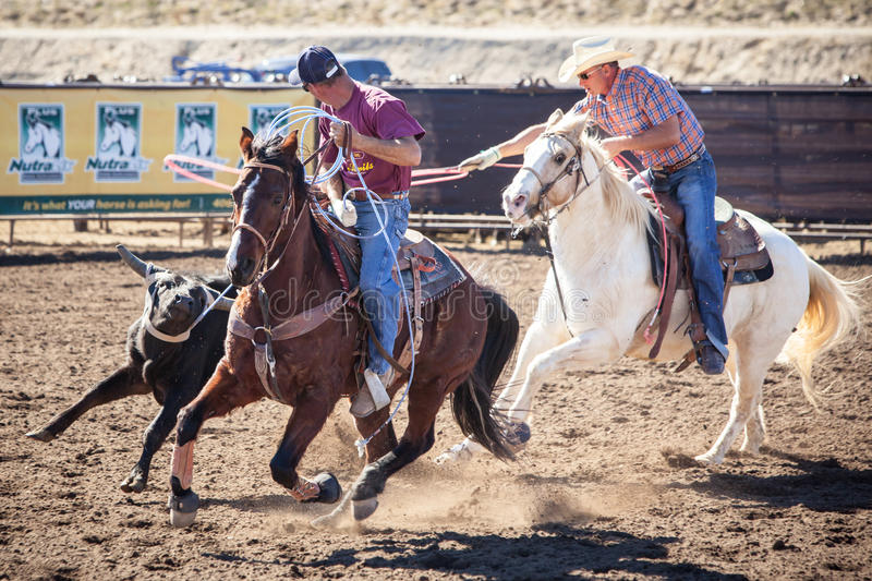 Team Roping Competition royalty free stock photography