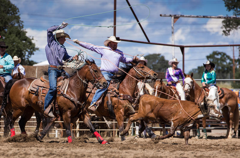 Team Roping. A cowboy catches his calf. in the team roping event. The rodeo in Cottonwood, California is a popular event on Mother's Day weekend in this small stock photos
