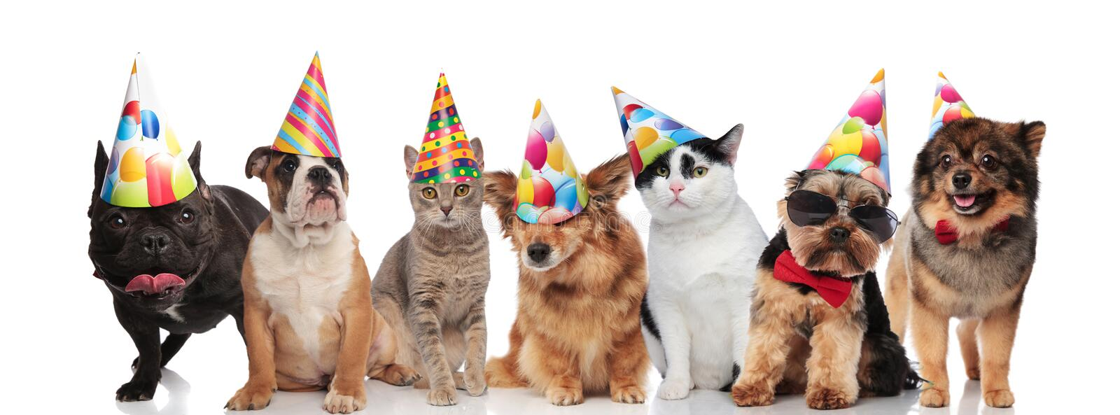 Team of seven happy pets wearing colorful birthday hats royalty free stock images