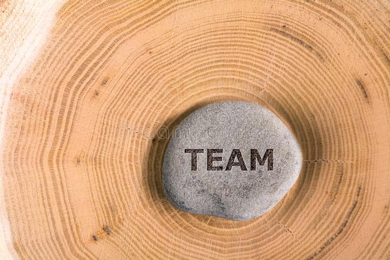Team in stone on tree. Team in stone on section of the trunk with annual rings royalty free stock images