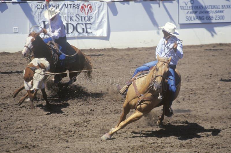 Team tågvirkehändelsen, gamla spanska dagar, Fiestarodeon och materielhästshowen, greven Warren Showgrounds, Santa Barbara, CA royaltyfri foto