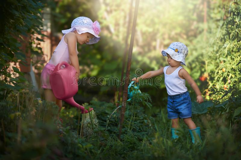 A team of two little gardeners watering strawberry royalty free stock images