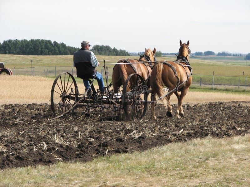Team van het Werken van Paarden stock afbeeldingen