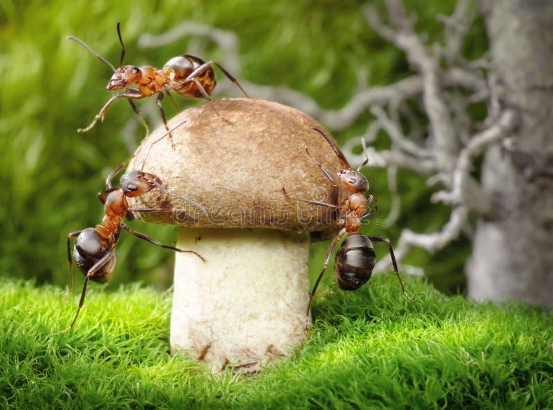 Team van mieren die, groepswerk als paddestoelen uit de grond schieten stock foto's