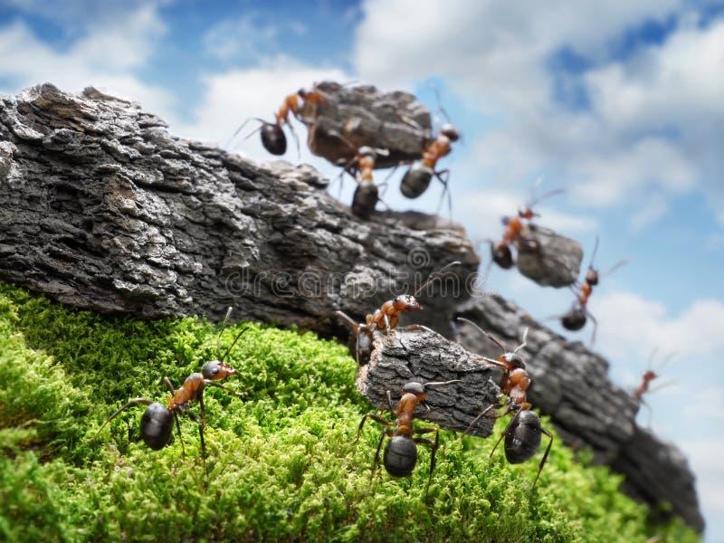 Team van mieren die Muur, groepswerkconcept costructing royalty-vrije stock foto