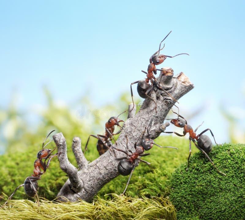Team van mieren en doorstane boom, groepswerkconcept royalty-vrije stock foto's