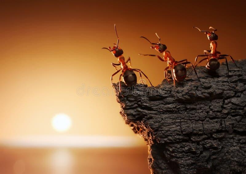 Team van mieren op rots het letten op zonsopgang of zonsondergang op zee royalty-vrije stock foto