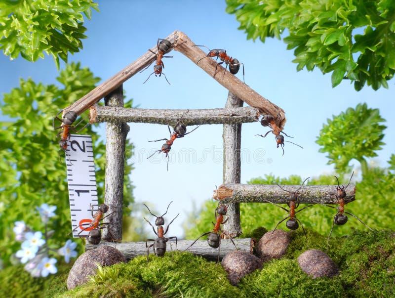 Team von den Ameisen, die Holzhaus, Teamwork konstruieren lizenzfreies stockfoto