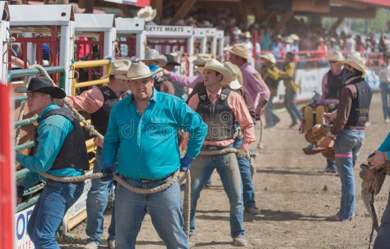 Teams von Cowboys bereiten vor sich, Pferde in Arena für wildes Pferderennen am Ansturm freizugeben stockfotografie