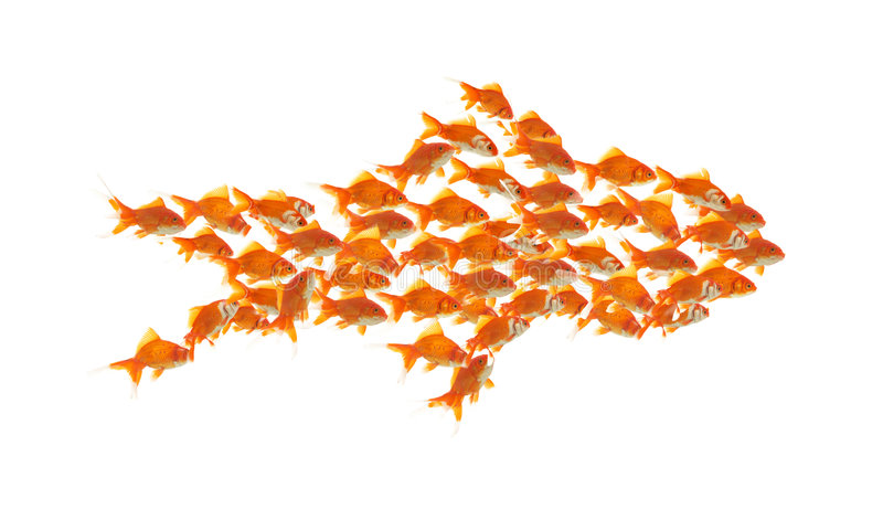 Teamwork. Business teamwork concept with goldfishes together
