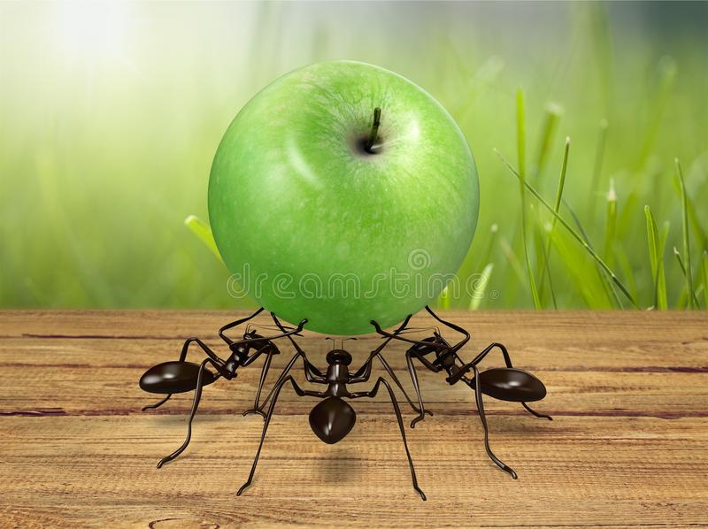 Teamwork. Ant cooperation challenge adversity conquering adversity determination royalty free stock photos