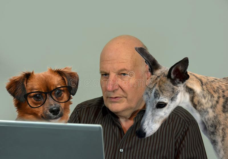 May we help you? Dogs and man working together, forming a team. Teamwork, senior man and his dogs working seriously at the computer