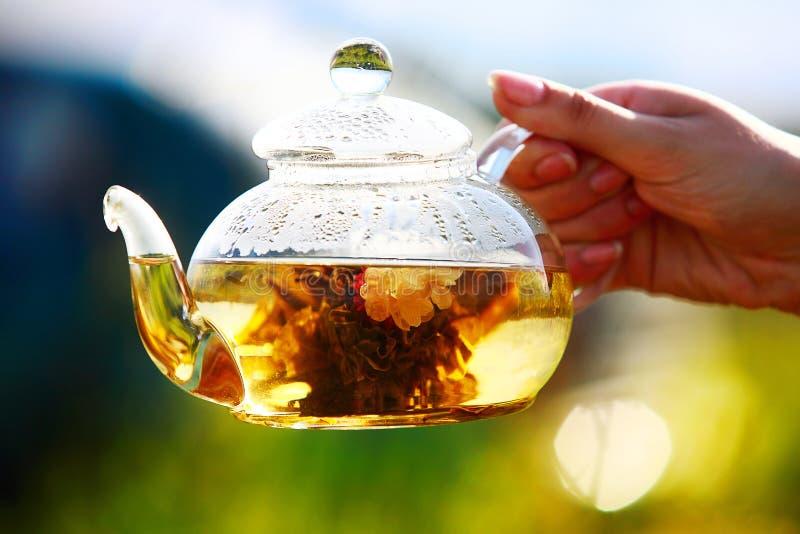 Teapot γυαλιού με το άσπρο κινεζικό τσάι στο θηλυκό χέρι στοκ εικόνα με δικαίωμα ελεύθερης χρήσης