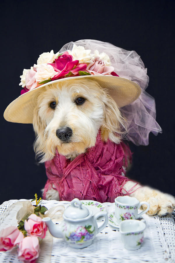 Teatime Doggie Royalty Free Stock Images