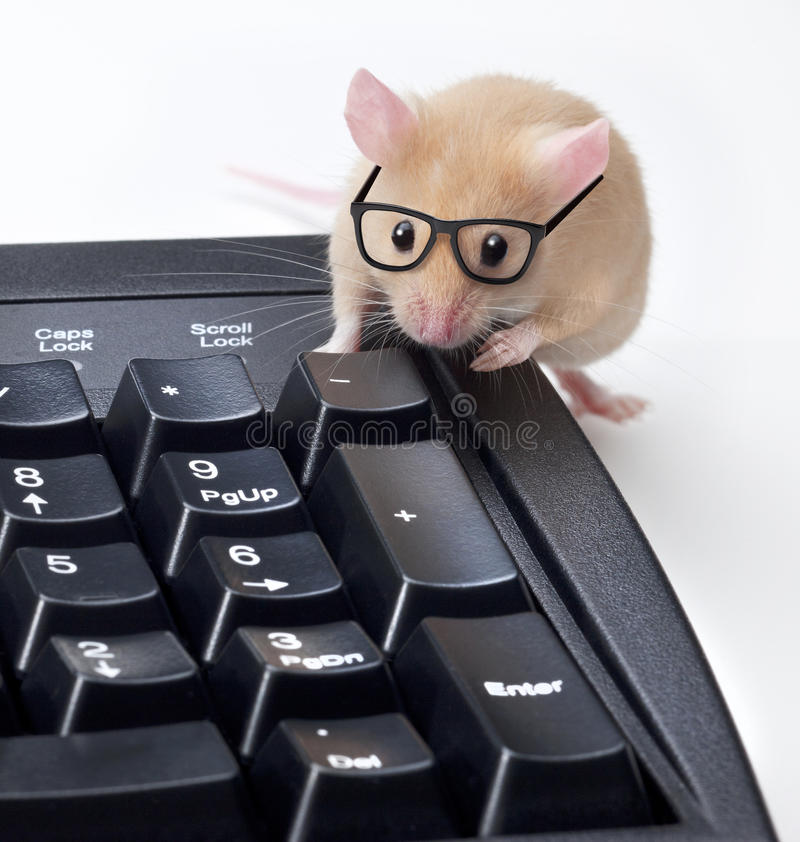 Technical Support Computer Mouse Programmer. A mouse wearing glasses leaning on a computer keyboard giving computer technical support